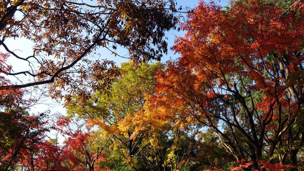 紅葉が綺麗な有野実苑オートキャンプ場です。