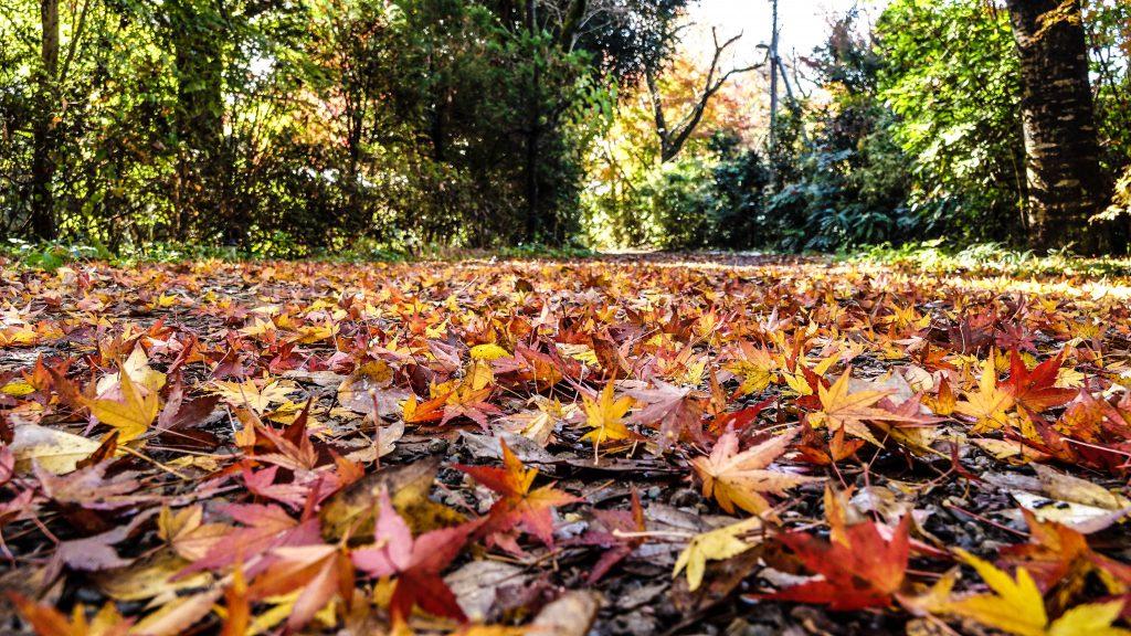 落ち葉の絨毯を楽しめるキャンプ場です。